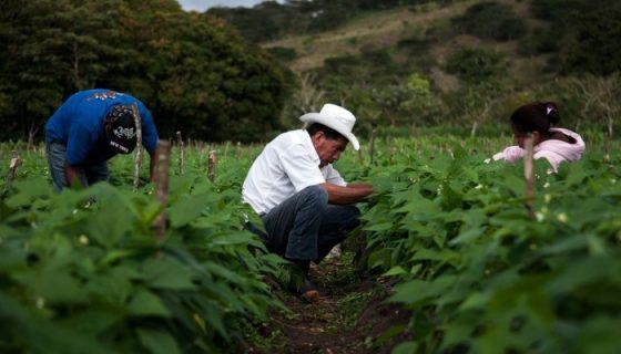 Fenómeno de El Niño, El Niño, fenómenos climáticos, agricultura