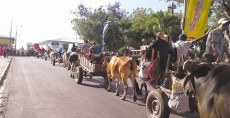 Las 21 carretas peregrinas que llegaron a Diriamba  de ciudades vecinas iban cargadas con leña, artesanías y ofrendas a San Sebastián. LA PRENSA/M. GARCÍA
