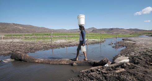 cosecha de agua, agua