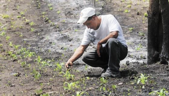 Si la temperatura en el mundo sube un grado eso afecta aún más la temperatura en los países tropicales como Nicaragua, ya que sube hasta cuatro grados sobre la norma histórica. LA PRENSA/ ARCHIVO