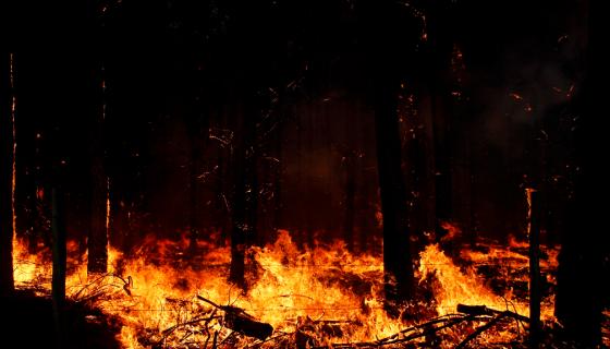 Detalle de un incendio forestal en la provincia de Cauquenes, región del Bio Bio, Chile, en enero de 2017. LA PRENSA / EFE/ Dragomir Yancovic.