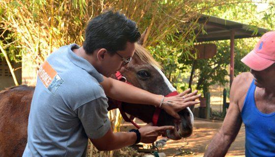 equinos, animales