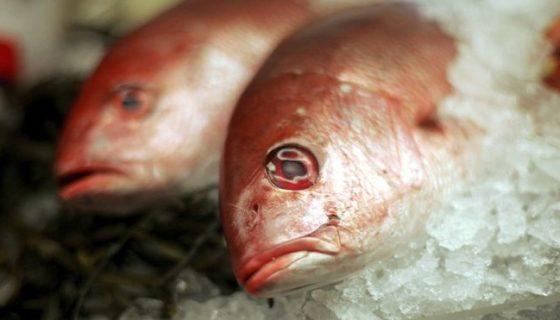 pescado, Suecia, planeta