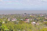 Alarmante pérdida boscosa en Managua