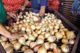 Cebolla en sube y baja de precios