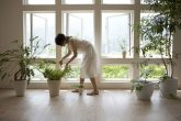 Decoración con plantas, la tendencia del hogar
