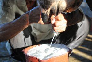 La falta de agua y pasto en varias zonas de Las Segovias preocupa a los productores, que ya comienzan a ver mermadas sus ganancias por la poca producción de leche. LA PRENSA/ARCHIVO