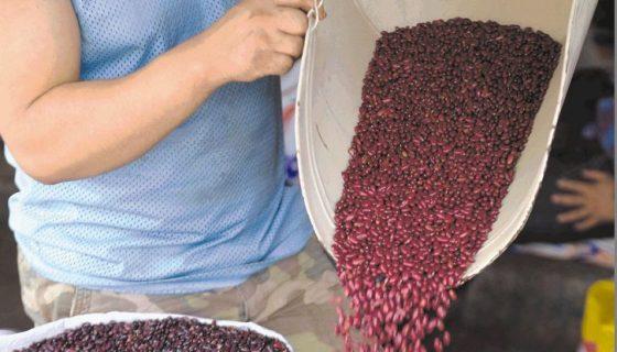 Frijoles bajan de precio en los principales mercados de Managua.LAPRENSA/ARCHIVO