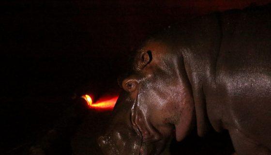hipopótamo, El SALVADOR, ZOOLÓGICO