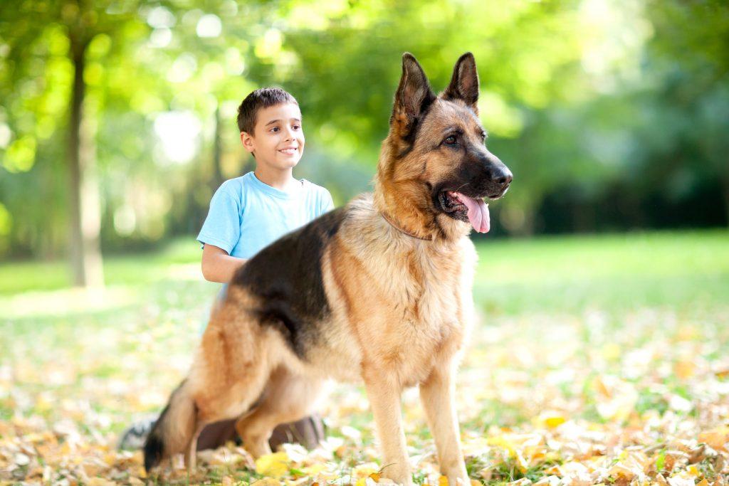 The six breeds of dogs most popular Nicaragua - La Prensa (Nicaragua) 2
