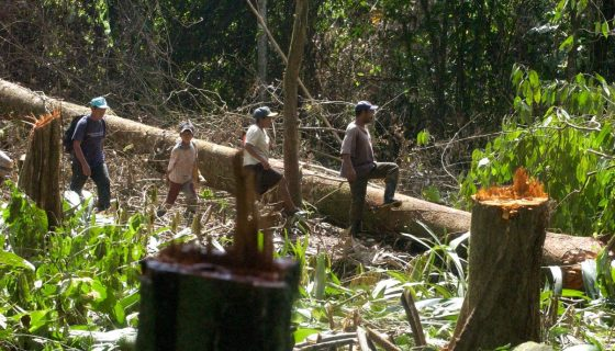 Indígenas, Nicaragua