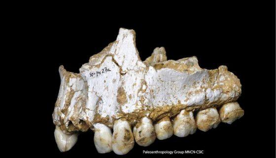 Los neandertales, usaban la corteza de árboles y las plantas de su entorno para fabricar incipientes medicamentos semejantes a las aspirinas y antibióticos. EFE