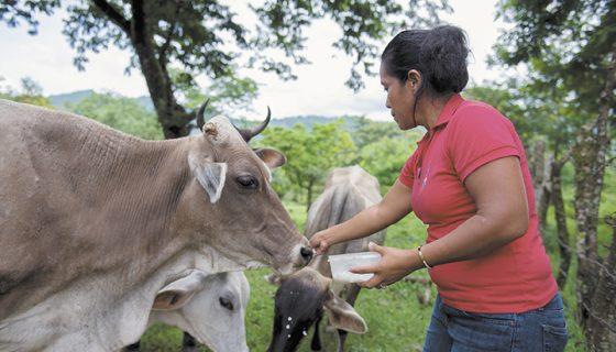 programa Hambre Cero, Nicaragua, Daniel Ortega