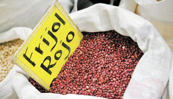 producción de frijol rojo, Nicaragua, frijol rojo