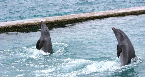 Una de las atracciones del oceanario de las Islas del Rosario, es el show de delfines.