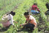 Gasto público de Nicaragua debe privilegiar al sector agropecuario