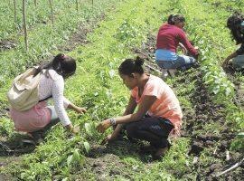 Agroecología, alimentos