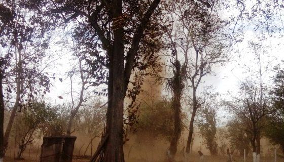La preparación de tierras para la cosecha de caña y maní provoca las tolvaneras / LA PRENSA /S. Martínez