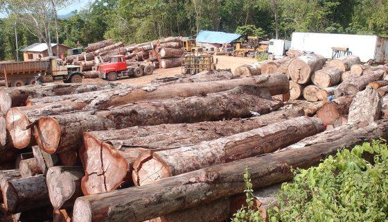 delitos ambientales, multas, sector forestal, reforestadores, reforma Inafor, delitos ambientales