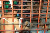 Policía rehúsa acatar órdenes de jueces, denuncia Cenidh