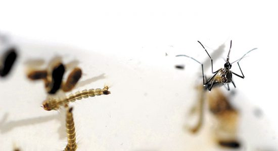 vacuna contra la malaria
