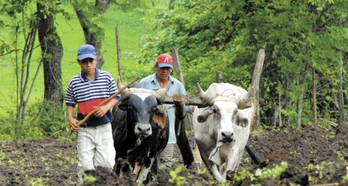 INSS, sector agropecuario