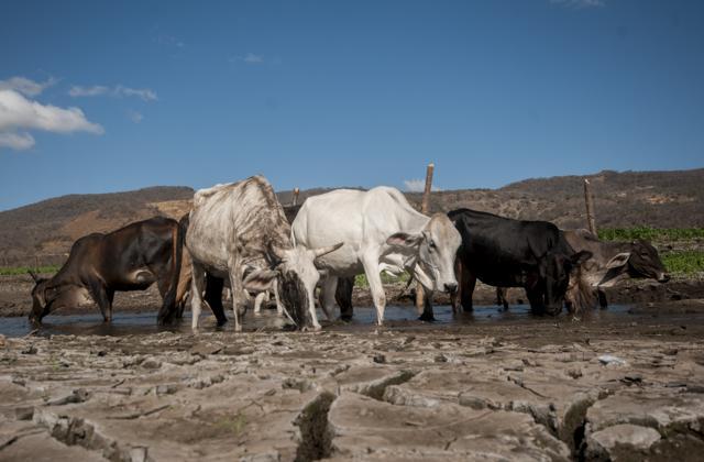 sequía, Cambio climático, Acuerdo de París