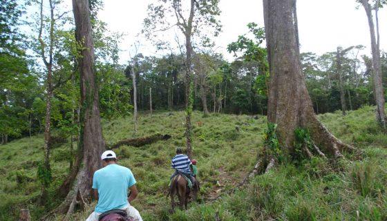 Conflicto en Caribe Norte, colonos, expansión de la ganadería