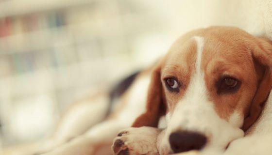 Mascotas, Nestlé, enfermedades