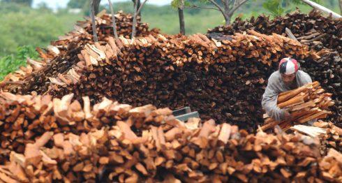 reserva indio maiz, reservas biológicas, Nicaragua, reservas de Nicaragua, reservas