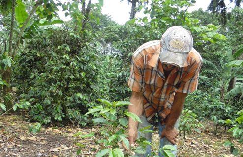 prácticas agrícolas