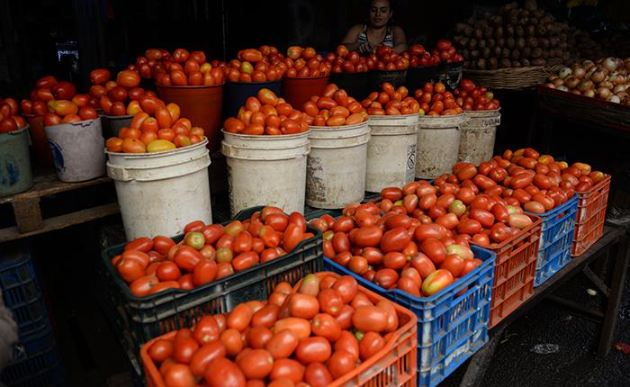 Sube el precio del balde pequeño de tomates en los principales mercados. Comerciantes afirman que es por la llegada del invierno. LAPRENSA/ ARCHIVO