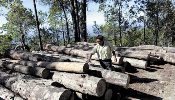 madera incautada, Inafor, Jaime Incer