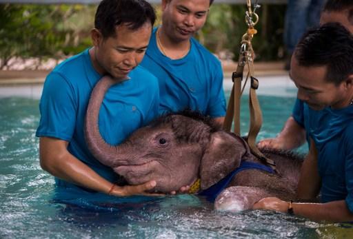 El emocionante rescate de un elefante bebé que pudo salir del agua gracias a su madre y a su tía