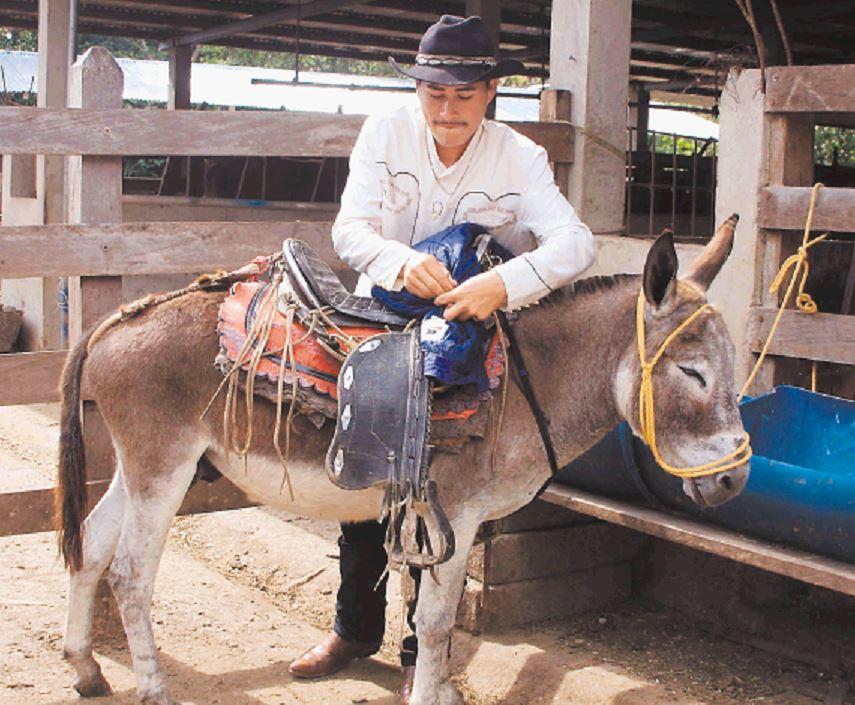 Todo listo para el festival de burros somoteños
