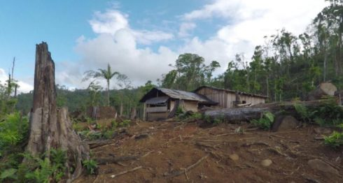 Reserva Biológica Indio Maíz, ganado, Caribe Norte
