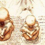 bebés, teorías
