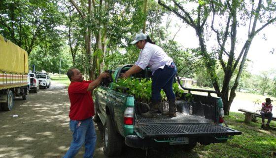 Siuna, reforestación