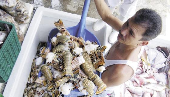 Escasez de langosta, Corn Island