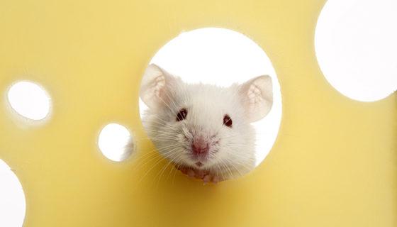 ratones, ratones