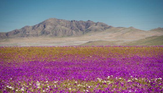 Atacama, Desierto del Atacama, El milagro del Atacama, Chile, desierto más árido del mundo